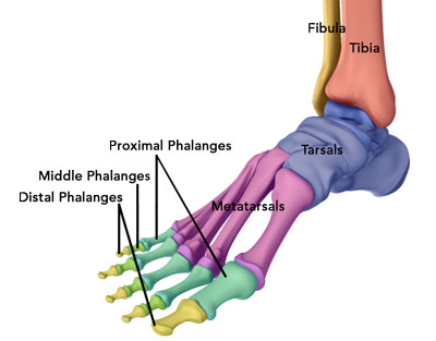 Foot Ankle Conditions Ankle Pain Cincinnati Oh West Chester